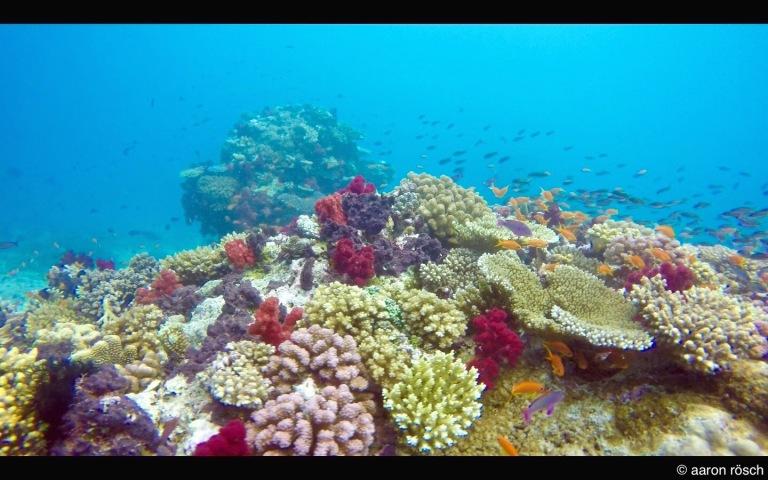 Taveuni Reef.jpg